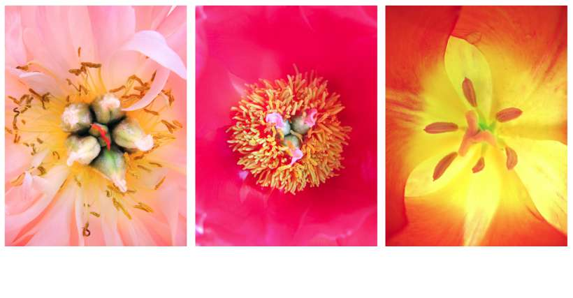 flowers_dsgn1.jpg