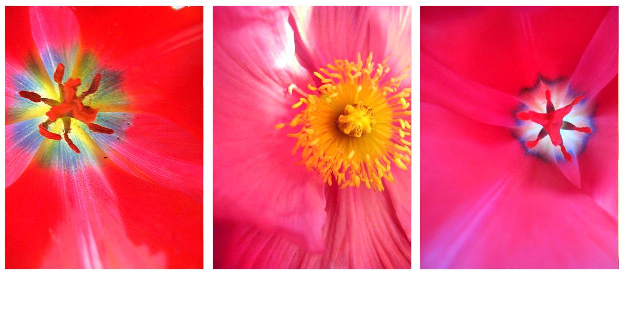 flowers_dsgn2.jpg